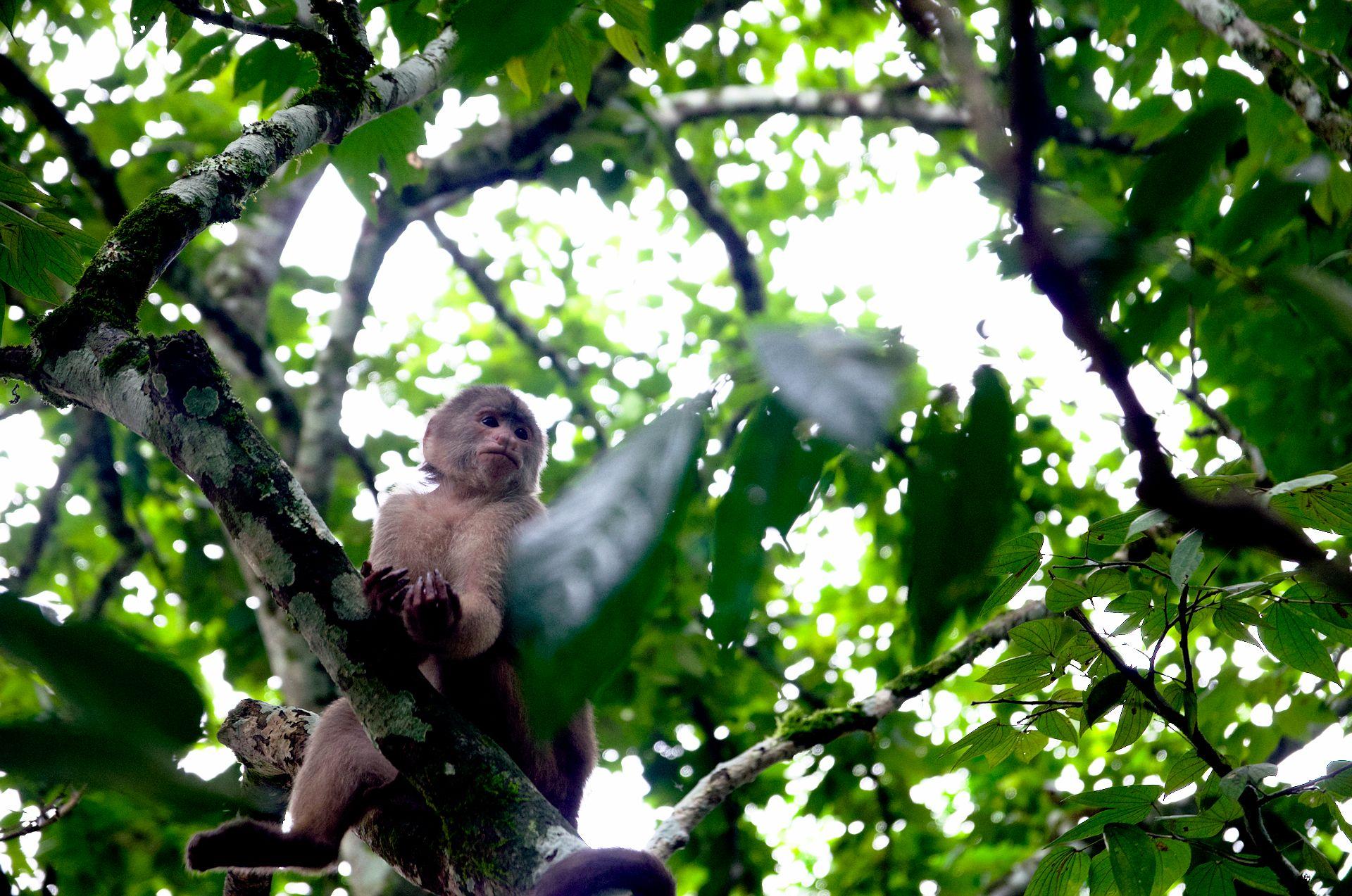 In Tena im Dschungel