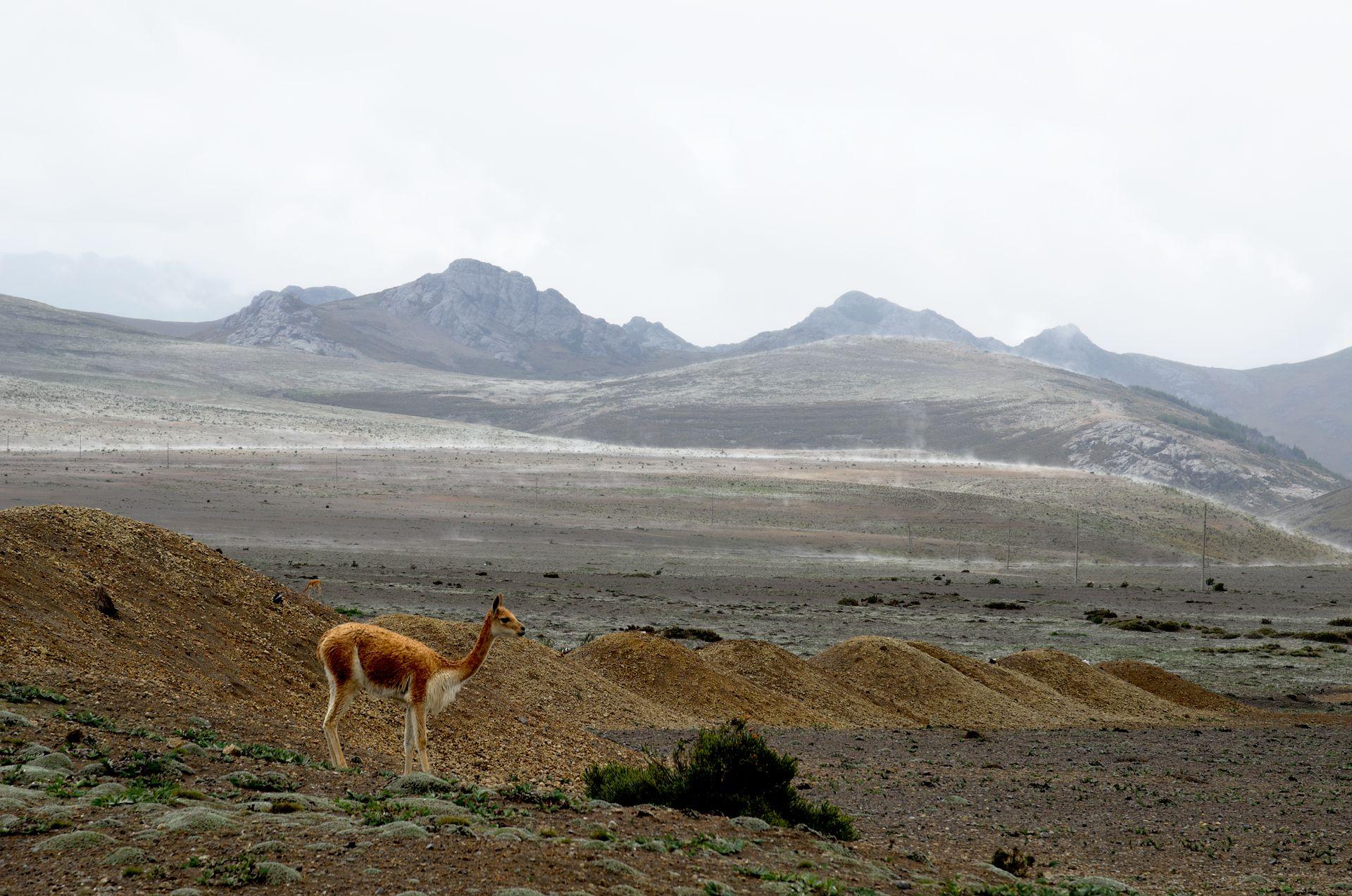 Riobamba: Familie und ein Vulkan