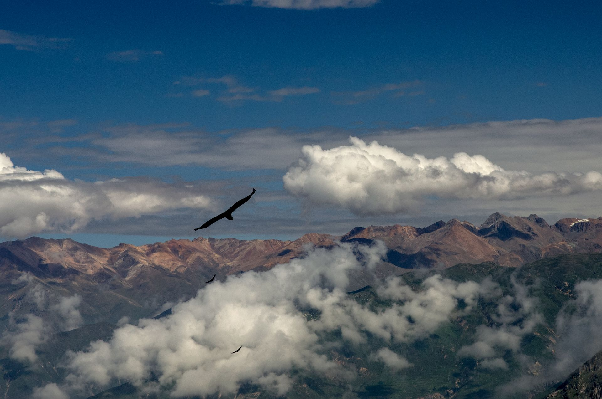 Cañon del Colca: zu Besuch bei den Kondoren